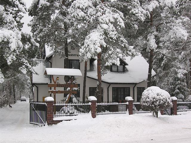 Stokrotka pod śniegiem