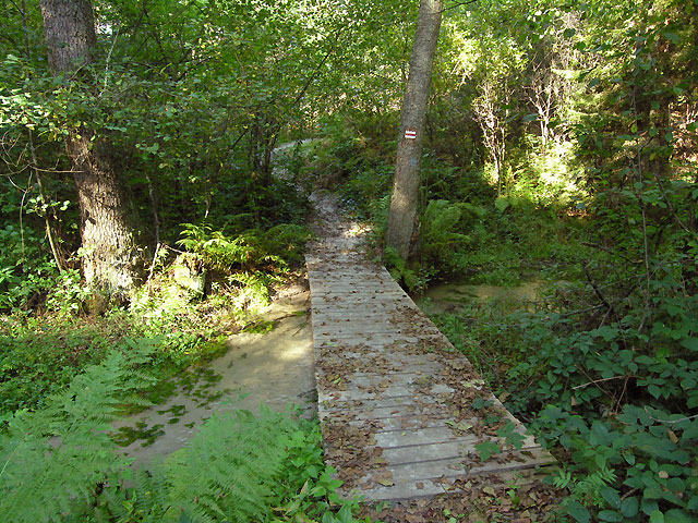 przejście przez mostek na rzece Krynica