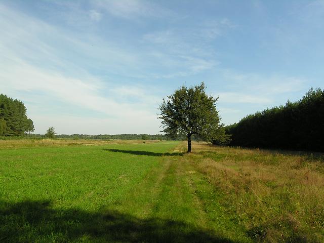 samotne drzewo na polach Zagóry