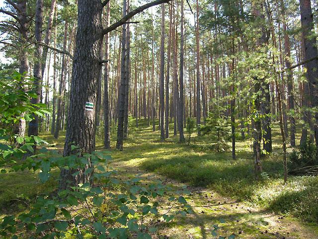 wzdłuż lasu na wschód