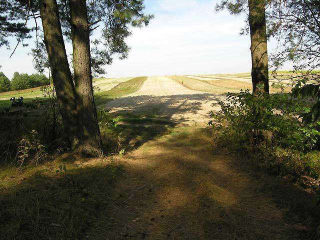 wyjście na pola, skręt w lewo