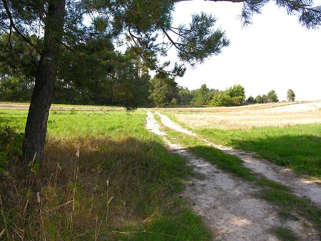 droga w lewo ponad lasem